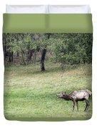 Juvenile Bull Elk Grazing 2 Duvet Cover