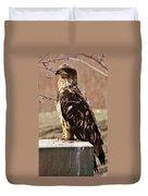 Juvenile Eagle Duvet Cover
