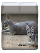 Kangaroo Relaxing On Ground In The Sun Duvet Cover