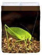 Katydid Close Up Bug Duvet Cover