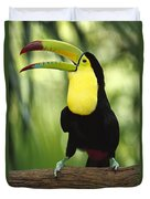 Keel Billed Toucan Calling Duvet Cover