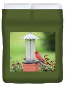 Kentucky Cardinal  Duvet Cover