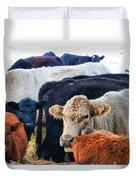 Kibler Valley Cows Duvet Cover