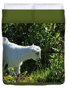 Kid Goat In Bushes Duvet Cover