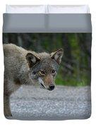 Killarney Coyote Duvet Cover