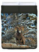 King Of The Canadian Rockies Duvet Cover