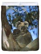 Koala Phascolarctos Cinereus Mother Duvet Cover