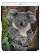 Koala Phascolarctos Cinereus Duvet Cover by Zssd