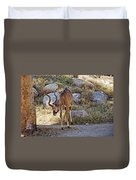 Kudu Near A Waterhole In Living Desert Zoo And Gardens In Palm Desert-california  Duvet Cover