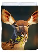 Kudu Portrait Eating Green Leaves Duvet Cover