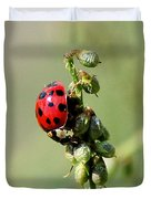 Lady Beetle Duvet Cover