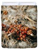 Ladybugs En Masse Duvet Cover