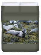 Large Harbor Seal Colony In Scotland Duvet Cover