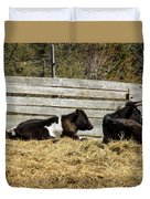 Lazy Cows And Weathered Wood Duvet Cover