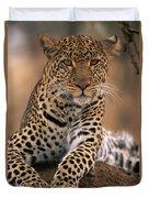 Leopard Panthera Pardus, Masai Mara Duvet Cover by Anup Shah
