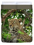 Leopard With Piercing Eyes Duvet Cover
