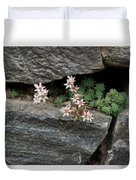 Life On Bare Rock - Pale Pink Succulents On The Wall Duvet Cover