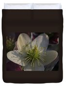 Light And Shadow Hellebore Flower Duvet Cover