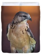Light Morph Immature Swainsons Hawk Duvet Cover