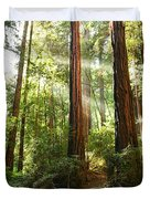 Light The Way - Redwood Forest Of Muir Woods National Monument With Sun Beam. Duvet Cover