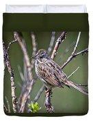 Lincoln's Sparrow Duvet Cover
