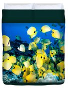 Lined Butterflyfish Duvet Cover
