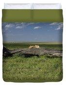 Lion On A Log Duvet Cover