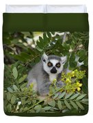 Little Ring-tailed Lemur Duvet Cover