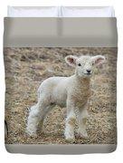 Little White Lamb Duvet Cover