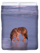 Lone Coyote On The Shore Of Lake Superior Duvet Cover