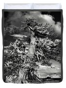 Lone Gnarled Old Bristlecone Pines At Crater Lake - Oregon Duvet Cover by Christine Till