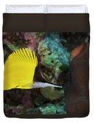 Longnose Butterflyfish Duvet Cover by Steve Rosenberg - Printscapes
