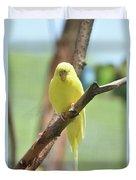 Lovable Yellow Budgie Parakeet Bird Up Close Duvet Cover