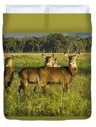 Lovely Ladies Duvet Cover