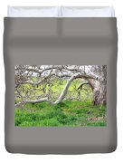 Low Branches On Sycamore Tree Duvet Cover