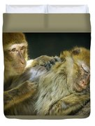 Macaques Jerez De La Frontera Spain Duvet Cover