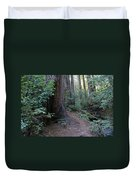Magical Path Through The Redwoods On Mount Tamalpais Duvet Cover