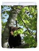 Maine Black Bear Cub In Tree Duvet Cover