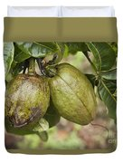 Malabar Chestnuts Duvet Cover