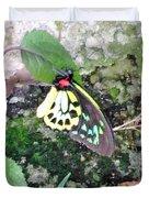 Male Birdwing Butterfly Duvet Cover