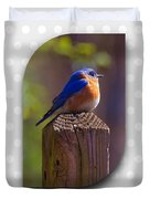 Male Bluebird Duvet Cover