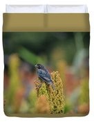 Male Cowbird Feasts On Milo In Shiloh National Military Park, Tennessee Duvet Cover