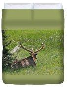 D10270-male Elk  Duvet Cover