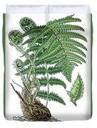male fern, Dryopteris filix-mas Duvet Cover