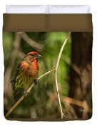 Male Finch In Red Plumage Duvet Cover