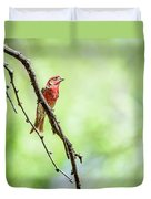 Male House Finch Out On A Limb Duvet Cover
