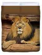 Male Lion Looking Right At Me Duvet Cover