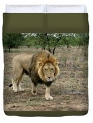 Male Lion On Alert Duvet Cover