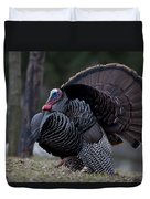 Male Wild Turkey, Meleagris Gallopavo Duvet Cover