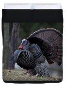 Male Wild Turkey, Meleagris Gallopavo Duvet Cover